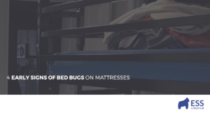 4 Early Signs of Bed Bugs on Mattresses