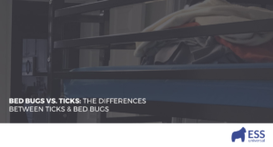 Bed Bugs vs. Ticks: The Differences Between Ticks & Bed Bugs